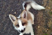 Foxes  / Just. Yes. Foxes are life!