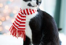 Kitten Catten ♥