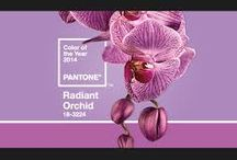 COLOR OF THE YEAR 2014.RADIANT ORCHID. / PINS ABOUT 2014 COLOR OF THE YEAR.