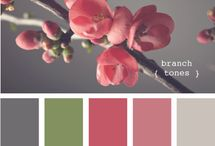 Color schemes / by Ashley