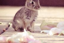 bunnies, králiky