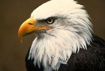 eagle scout stuff