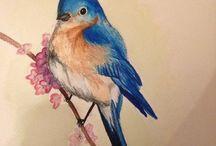 Bird - Madarak