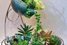 Bahçe bitki