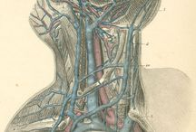 Anatomy & Medical Illustrations / by Fullerton College Library
