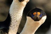 Birds, Animals, Nature bites