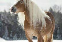 Heste! / HESTE BILLEDER OG DIY