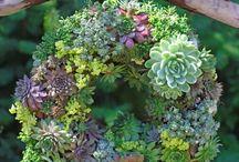 { succulent  wreaths } / Living wreaths