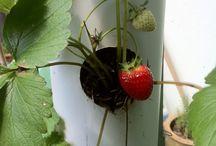 Una giornata in giardino / Costruire un verticale garden