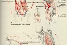 hest-anatomy
