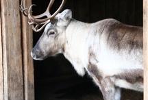 Rudolf.... ByMAR