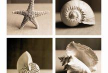 beach/shells