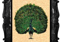 Wedding vintage peacock prints