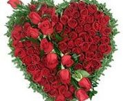 Send flowers to Bokaro steel city / Flowers are the symbolize and elegence,thoughtfulness and care for the person to whom you are sending this beautiful flowers. http://www.onlinedelivery.in/flowers-delivery-in-bokaro-steel-city.aspx