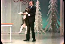 Dog Show / by Animal Engine