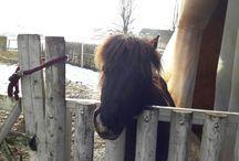 Ponyfotos, Pony, Pferd, pferdige Sprüche, Weisheiten