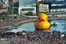 Tolo Bath Duck