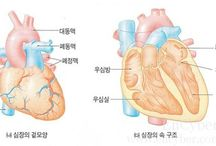 Солонгос хэл