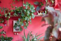 mur couleur