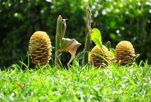 Risaralda Nature / Descubre en imagenes a Risaralda Colombia uno de los 32 departamentos de Colombia. Su mayor atractivo son sus paisajes en los que destacan los cafeteros; junto a Quindio y Caldas conforman el eje o triángulo del cafe, actualmente Patrimonio Cultural de la humanidad.
