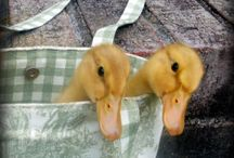 Duck Duck Goose / by Terra R.