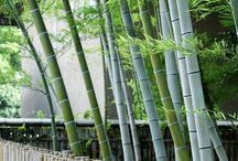 Muros~Bambú