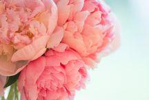 for the pretty