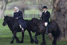 osobnosti+koně ❤