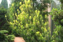 Landscape Inspired / Landscape Architecture and Inspiration. Gardening.