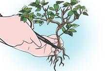 disegni bonsai