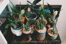 kaktusy a jiné kytimiti