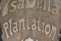 Isabella platation