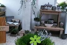 Lösing's Gartenflora