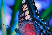 bugs / batterfly,