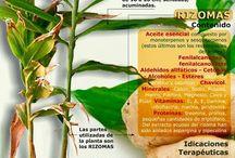 plantas medisinales