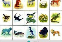 TÉMA-Les a lesné živočíchy / Lesné živočíchy, obrázky, rôzne aktivity.
