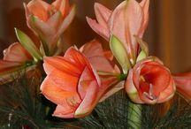 virág szaporitás ápolás,