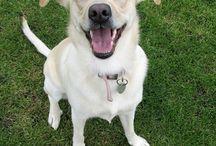 Roxy / My dog, my love, my bestfriend