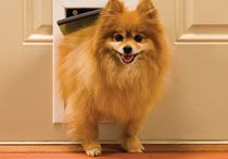 Dog Doors / Door and wall entry pet doors are the most versatile pet doors. With a little do-it-yourself experience, they're easy to install in most doors or walls (tunnel required). Choose from doors with plastic or aluminum frames, energy-conserving flaps, and special locking options.