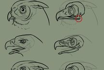 kurs ptaki