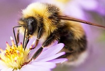 Bees / Bees are amazing creatures!