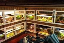Fishrooms