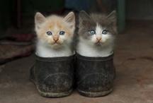 Cats / by Ivo Nový