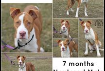 Featured Adoptables / We are looking for our Forever Homes!  Repin us Please!
