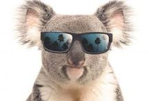 Aussie Discreet / Aussie Discreet