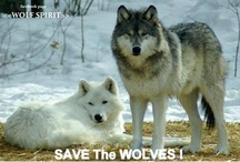 Wolves are Beautiful Creatures