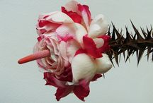 Inspiratie eva flora