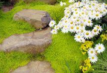 plantas inter rochas