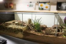 diy  animal cages / diy habitats for rodents. Much bigger and far more fun than shop bought prisons!