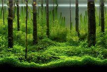 Aquarium, Aquascape / by Richtor Reynolds